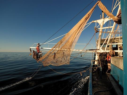 Prawn trawling - demersal otter technique