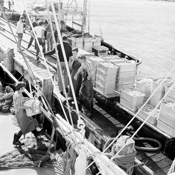 Australian prawn fishing history