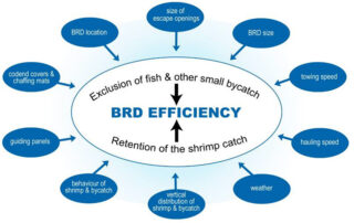 Bycatch reduction device efficiency factors